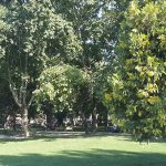 Park ve Yeşil Alan Bakımı
