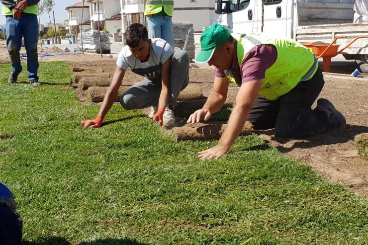 ankara hazır çim,hazır doğal çim,rulo çim,rulo çim ankara,rulo çim çeşitleri,rulo çim fiyatları, rulo doğal çim uygulaması